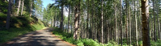 Logging road. A logging road that goes through a forest in Oregon Stock Photography