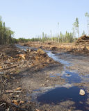 Logging road. Muddy road with puddles in a logging clear cut in Canada stock images