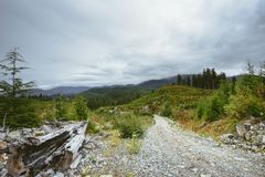 A logging road through a remote clear-cut royalty free stock photo