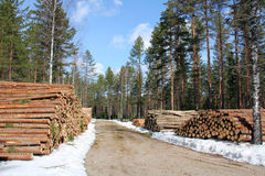 Logging Road at Spring Royalty Free Stock Images