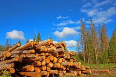 Logging in Russia. Logs in the logging. Harvesting of wood in Russia Stock Photo
