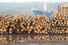 Cut Timber Waiting to Export Logging Shipyard Royalty Free Stock Image