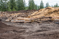 Logging site in the forest with logs Stock Photography