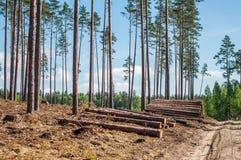 Logging site Stock Photo