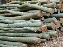 Logging, South Bohemia. Czech Republic Royalty Free Stock Photo