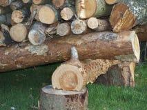 Logging, South Bohemia. Czech Republic Stock Images