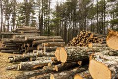 Logging_4 Royalty Free Stock Images