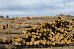 Logging Timber Forestry Industry. Logs for the timber and forestry industry are stored in stacks Royalty Free Stock Images