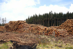 Logging timber industry Royalty Free Stock Images