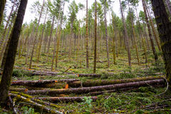 Logging Timber Industry Tree Thinning Stock Photography
