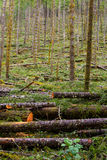 Logging Timber Industry Tree Thinning Stock Photos