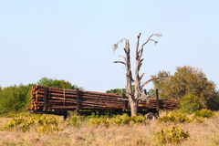 Logging Trailer - Florida Royalty Free Stock Photography