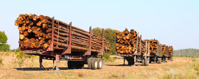 Logging Trailers - Florida Royalty Free Stock Photos