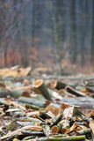 Logging trees. In an autumn forest Stock Photos