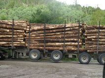 Logging Truck. A softwood logging truck moves quickly through the forest Royalty Free Stock Photo