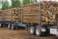 Logging truck. A view of the trailer a heavily loaded logging truck Stock Photos