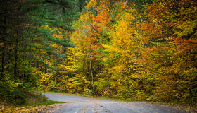 County roads in late October color. Royalty Free Stock Image