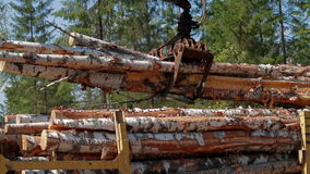 Logging Truck at Lumber Mill loaded with logs. And trees. Close up stock video