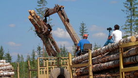 Logging Truck at Lumber Mill loaded tree trunk. Logging Truck at Lumber Mill loaded with logs and trees stock footage