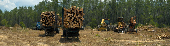 Logging trucks and machinery Royalty Free Stock Photo