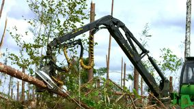 Logger with robotic arm lifting and sawing logs in forest. Deforestation stock footage
