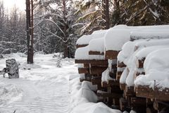 Logging wood in winter forest landscape pine. Season snow North stock images