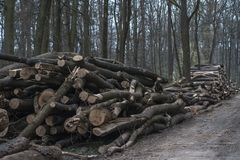 Logging - wooden logs of woods in the forest. royalty free stock image