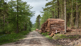 Logging in yorkshire. Logging industry in yorkshire uk stock photography