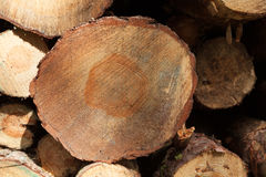 Logging in yorkshire. Logging industry in yorkshire uk stock images