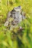 Login Gras Stock Afbeeldingen