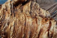 Login het hout royalty-vrije stock afbeeldingen