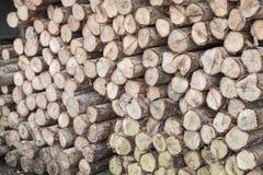 Login houten winkel Stock Fotografie