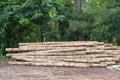 Login houten winkel Royalty-vrije Stock Foto