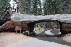 Login van de tunnel het park van de Sequoia stock afbeelding