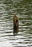 Login water royalty-vrije stock afbeeldingen