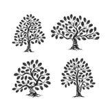 Logo énorme et sacré de silhouette de chêne d'isolement sur le fond blanc illustration libre de droits