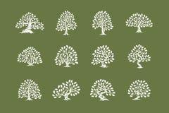 Logo énorme et sacré de silhouette d'usine de chêne d'isolement sur l'ensemble vert de fond illustration stock