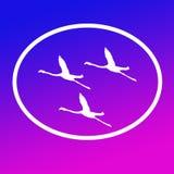 Logo Banner Image Flying Flamingo-Vogels in Ovale Vorm op Blauwe Magenta Achtergrond royalty-vrije illustratie