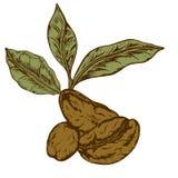 Logo Coffee Royaltyfri Bild