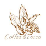 Logo coffee and cocoa. Logo aroma of coffee with coffee beans with coffee leaves and cocoa beans in retro style Stock Image