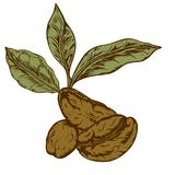 Logo coffee Royalty Free Stock Image