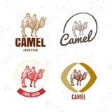 Logo coloré de vecteur réglé avec le chameau de désert illustration libre de droits