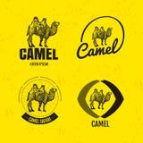 Logo coloré de vecteur réglé avec le chameau de désert Images stock