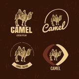 Logo coloré de vecteur réglé avec le chameau de désert Image stock