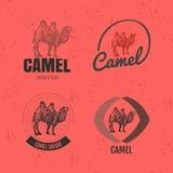 Logo coloré de vecteur réglé avec le chameau de désert Photo stock