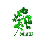 Logo Coriander  farm design Stock Photography