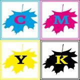 Logo d'érable de CMYK Photographie stock libre de droits