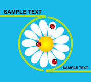 Logo daisy with ladybirds Stock Images