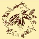 Logo de cacao et d'épices illustration libre de droits