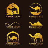 Logo de chameau d'or et scénographie de vecteur de signe Image libre de droits